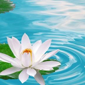 Hidrolatos - Agua de flores